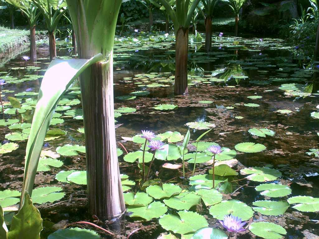 Seychellen Botanischer Garten